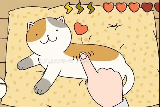 Các chú mèo rất thích được vuốt ve