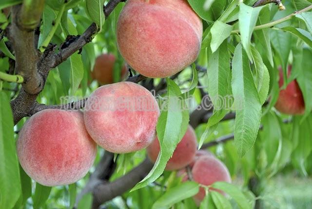 Top 7 loại trái cây bà bầu không nên ăn